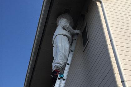 ハチの駆除サービス