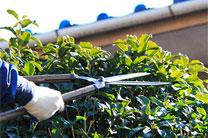 植木剪定・刈り込み